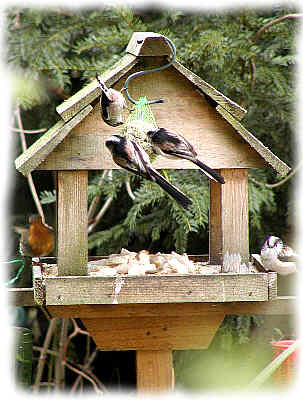 Our feathered friends tuck in to a feast!